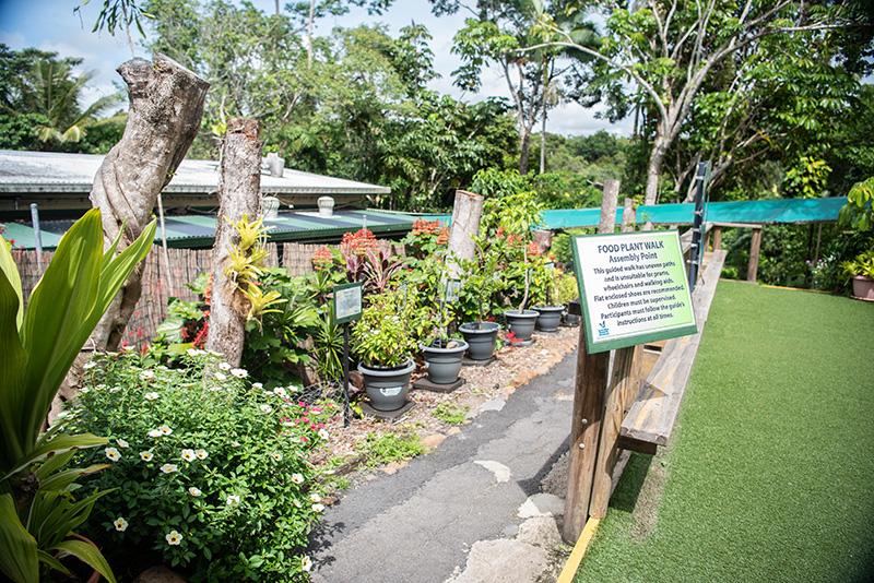 food plant walk australian butterfly sanctuary