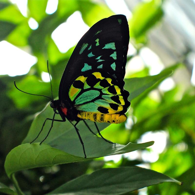 do butterflies sleep